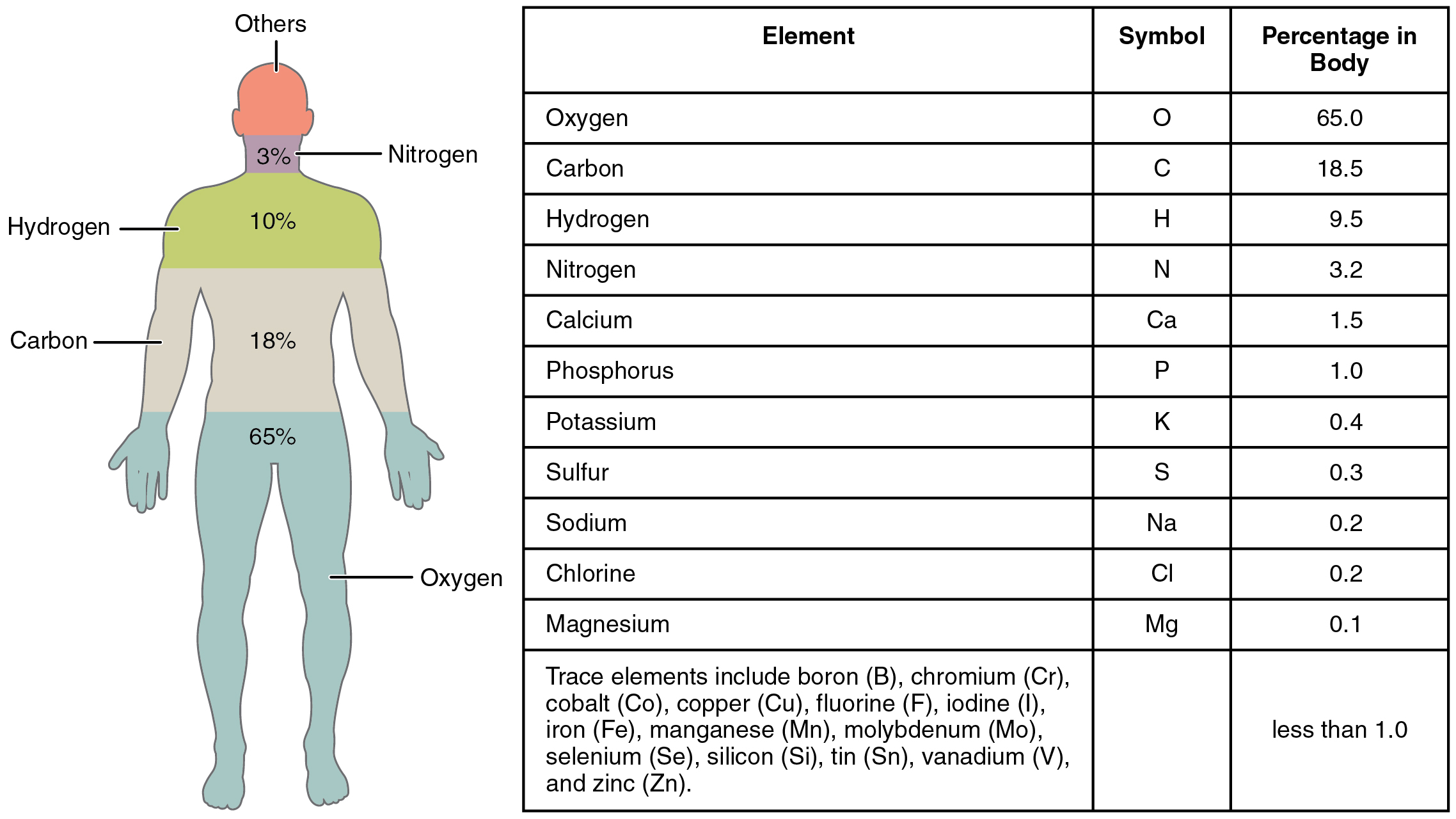 Elements and atoms the building blocks of matter this figure shows a human body with the percentage of the main elements in the body gamestrikefo Image collections