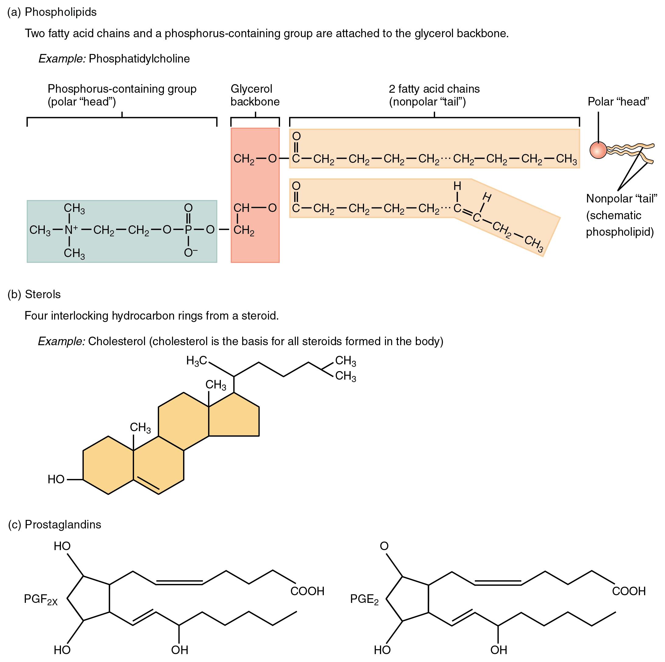 steroids structure pdf