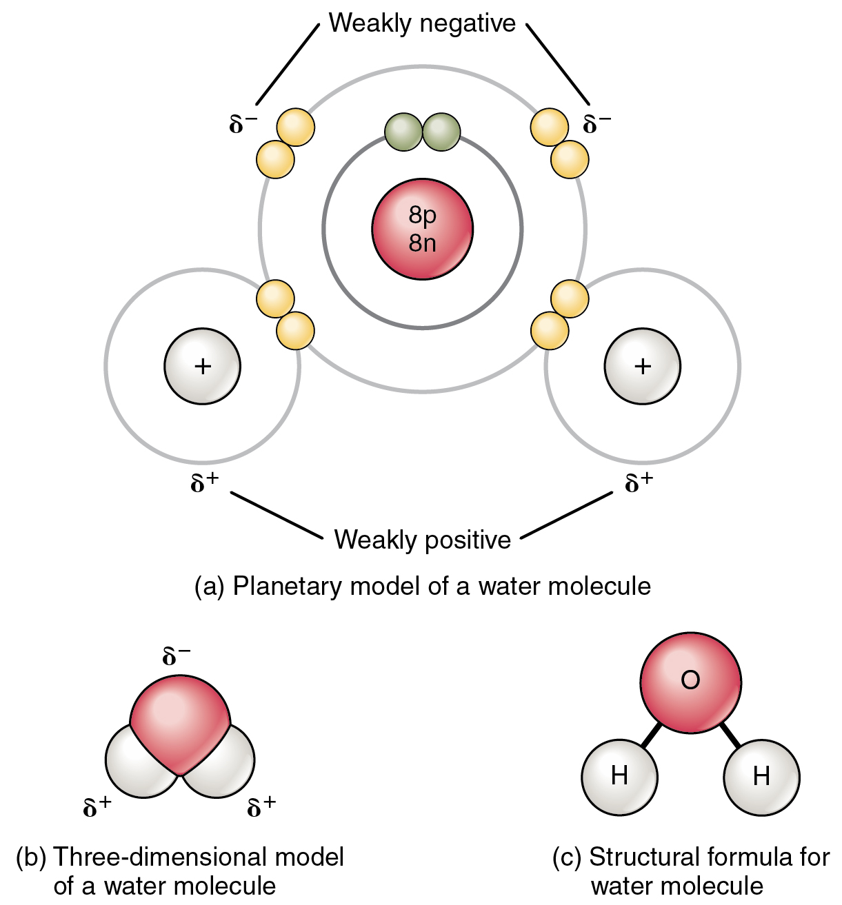 This figure shows the    structure    of a    water    molecule The top panel shows two oxygen atoms and