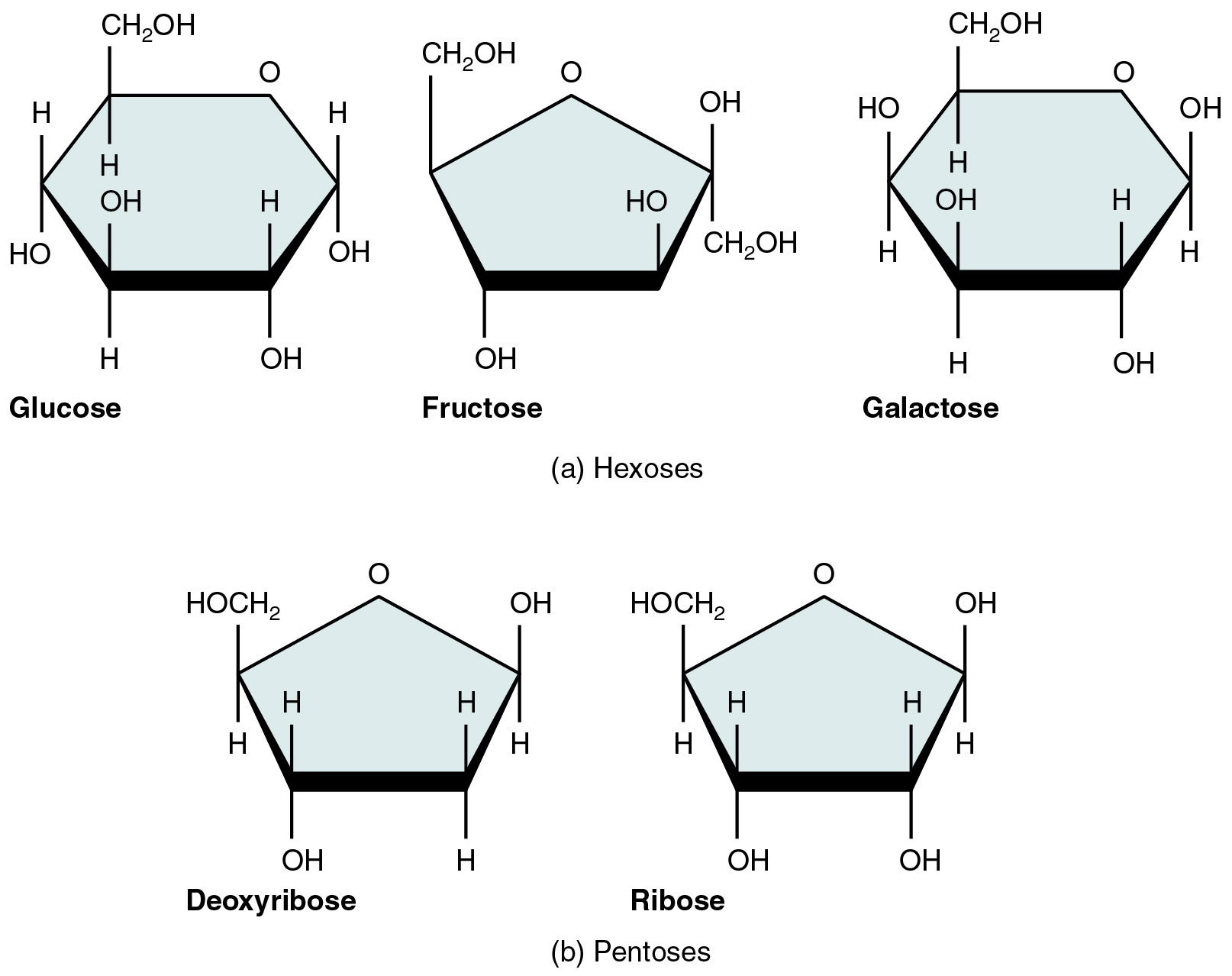 This figure shows the structure of glucose, fructose ...