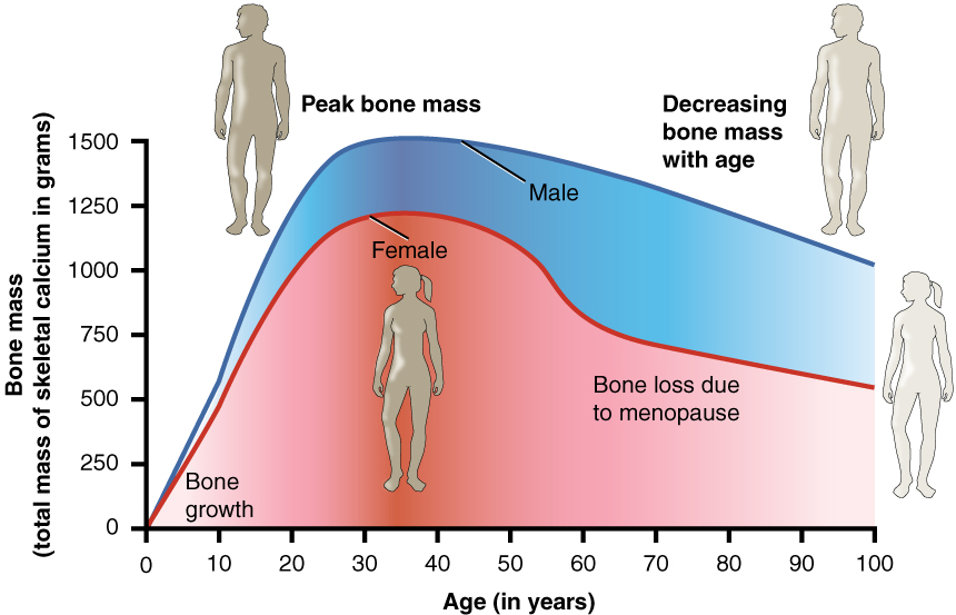 what is the relationship between bone density strength